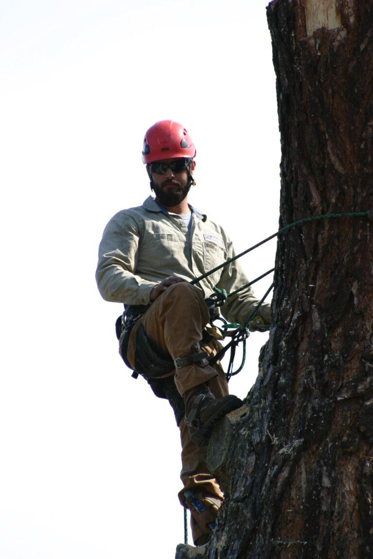 Arborist Tree Climbing1