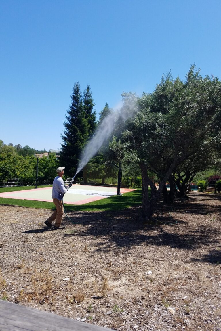 Wayne spraying olive tree 2
