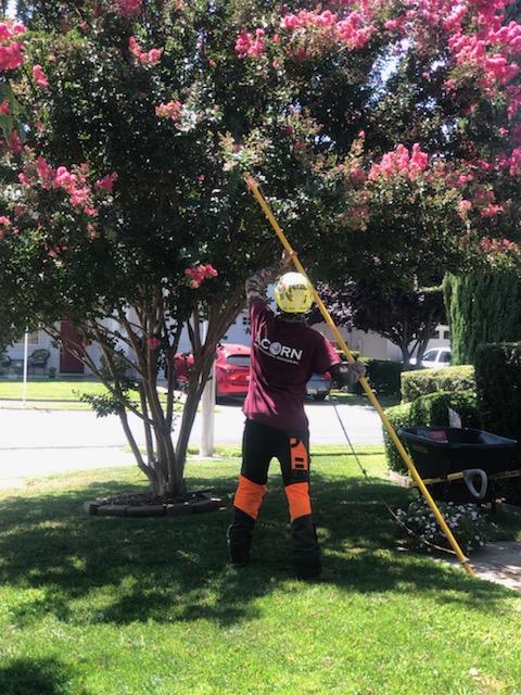 joe pruning